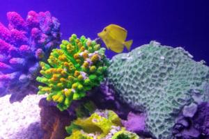 Corales de mar